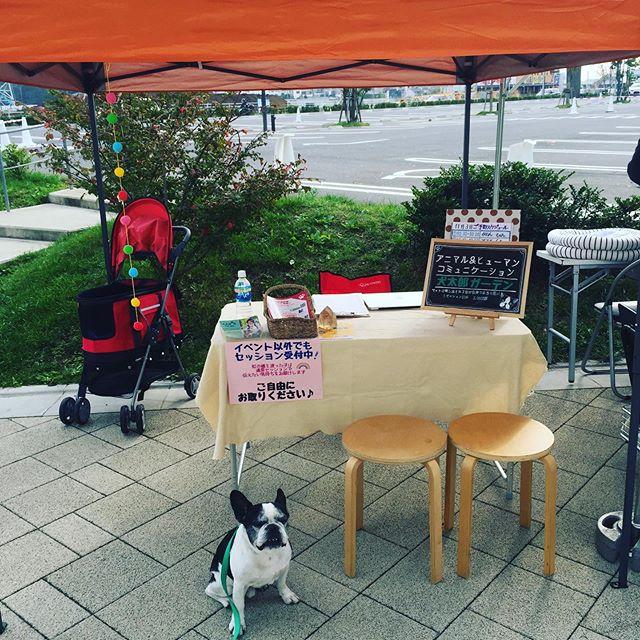 晴れたーワンOne day DX準備中!@dog.kashiwanoha ・・#ワンワンデー柏の葉 #ワンワンデー#犬太郎ガーデン#柏の葉 (Instagram)