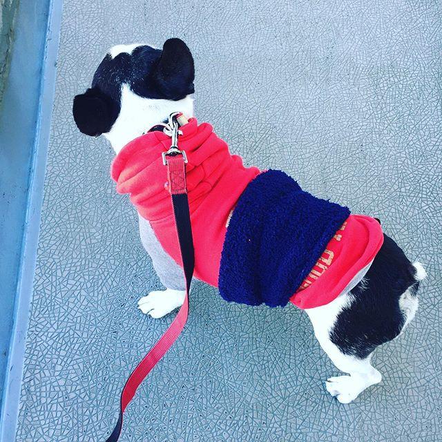 ガスレンジ磨き重曹クレンザーでつけおき五徳とレンジキャップがひと苦労魚焼きグリルは明日に持ち越しそして犬太郎さんぽもちろん、腹巻き散歩です笑・ ・#大掃除 #キッチンはしっかりやる#よく見たら雑だけどまいっかw#自己満が大事#ナチュラルお掃除#腹巻き犬#犬太郎ガーデン #犬太郎#シニア犬 #12才 (Instagram)