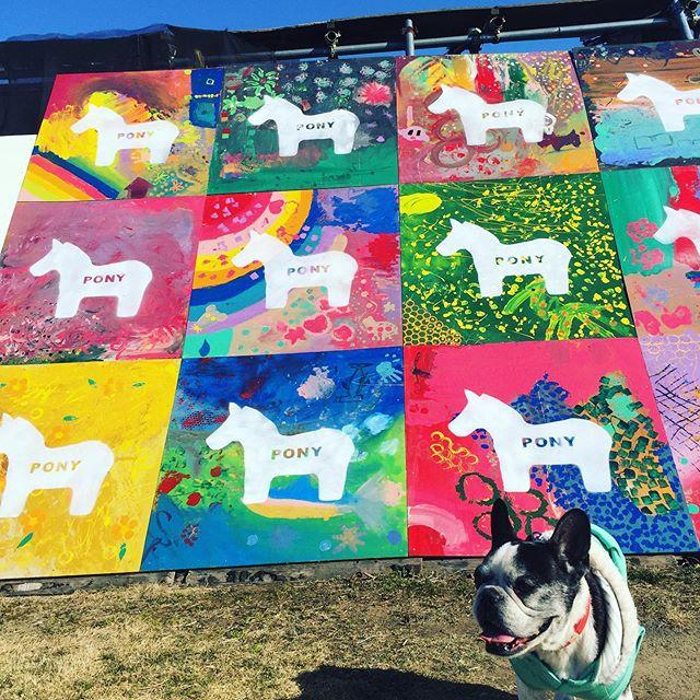 犬太郎の大好きな公園久しぶりに行ってきたよポニーにもお馬さんにも興味なしな犬太郎丘を駆け上がり恒例のわたしへのキックをし今日も元気いっぱい・・#犬太郎ガーデン #犬太郎#シニア犬 #13歳#あったかくて気持ちの良い休日#楽しかったね (Instagram)