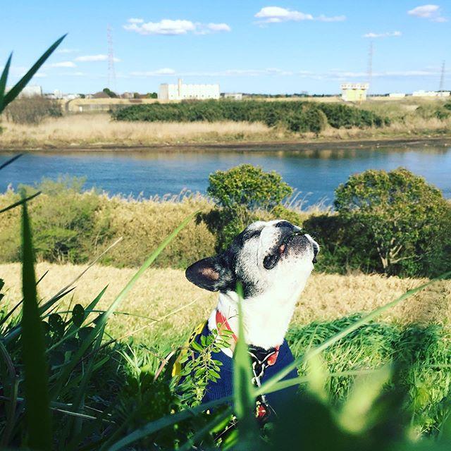 あったかあったかぁいやっと春の新芽をはむはむ喜びの勇姿?!笑・畑では相変わらずブロッコリーを直にかぶりつく害獣犬っぷりラディッシュはお家で洗ってからだよ・・#犬太郎ガーデン #犬太郎#春が来た #シニア犬 #13歳#フレンチブルドッグ#気分転換 (Instagram)